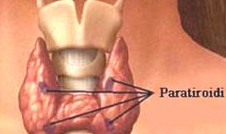 Ipoparatiroidismo cronico, positivo il parere europeo preliminare per l'ormone paratiroideo ricombinante
