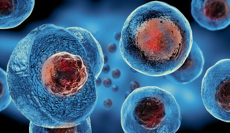 Il contatto diretto cellula-cellula tra osteoblasti e osteoclasti controlla dinamicamente la loro funzione in vivo